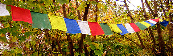 Prayer Flags in the forest